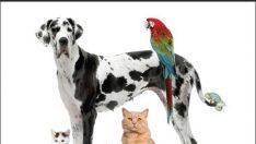 Veteriner Pratik Küçük Hayvan Uygulama Yöntemleri