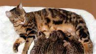 Yeni Doğan Yavru Kedilerde Beslenme