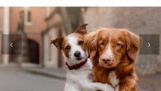 2.Sokak Hayvanları Refahı Kongresi