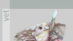 At Anatomisi, 6. Baskı