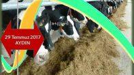 Süt İneklerinde Metabolik Profil Testleri ve Klinik Değerlendirmesi