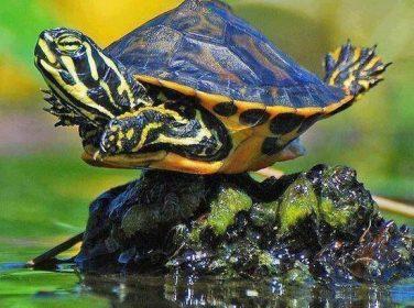 Kaplumbağlar Neden Güneşlenmeli?