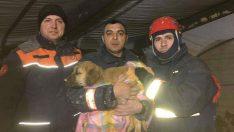 Kuyuya düşen köpek yavrusu 11 gün sonra kurtarıldı