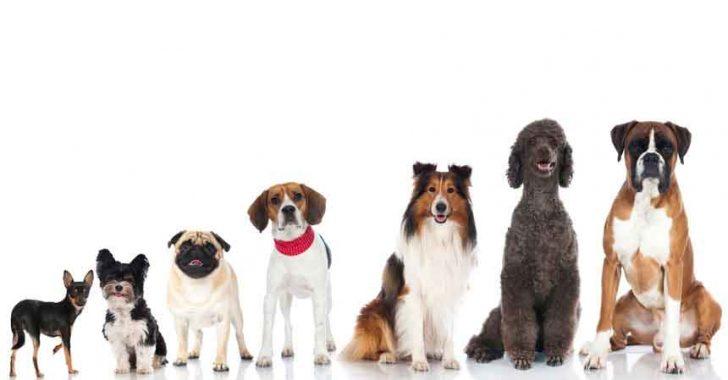 Köpek Nedir? Köpeğin Tarihçesi