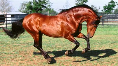 Atlarda Ahreç Don