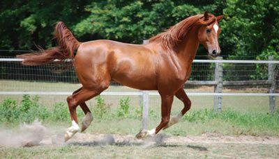 Atlarda Boz Don